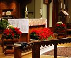 Poinsettias around the altar at Christmas